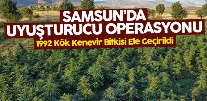 Samsun'da uyuşturucu operasyonu: 1992 Kök Kenevir Yakalandı!