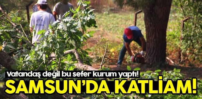 Samsun'da ağaç katliamı!