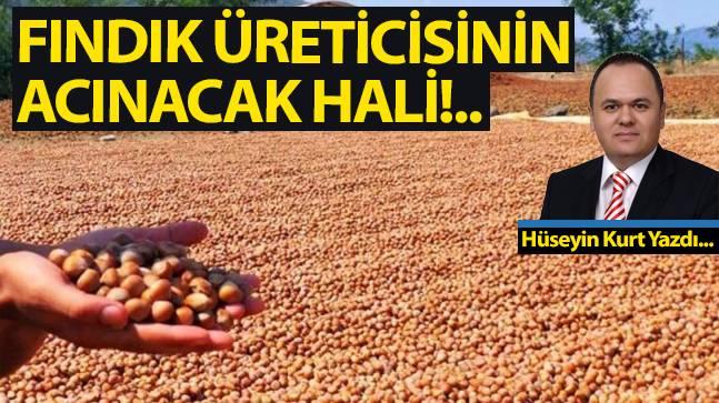 FINDIK ÜRETİCİSİNİN ACINACAK HALİ!..