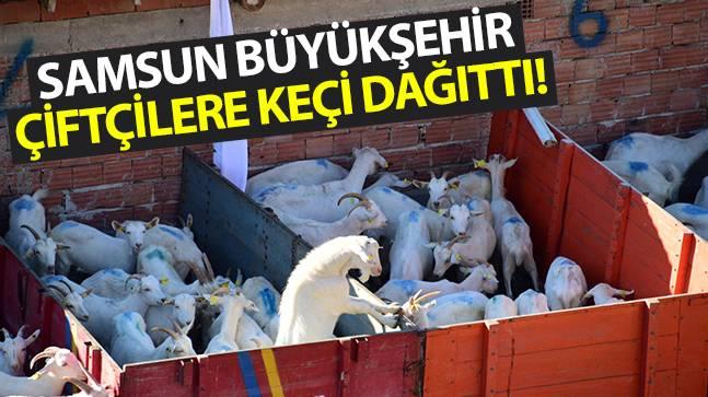 Samsun Büyükşehir Keçi Dağıttı!