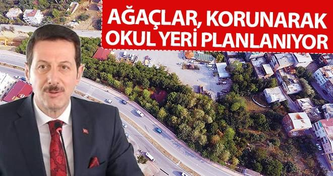 Başkan Tok: Ağaçlar, korunarak okul yeri planlanıyor