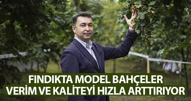 Fındıkta model bahçeler verim ve kaliteyi hızla arttırıyor