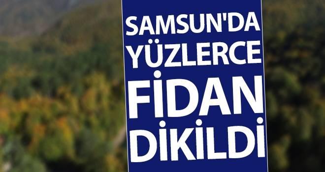 Samsun'da Yüzlerce Fidan Dikildi