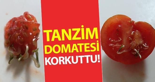 Tanzimde satılan 'domates' korkuttu!