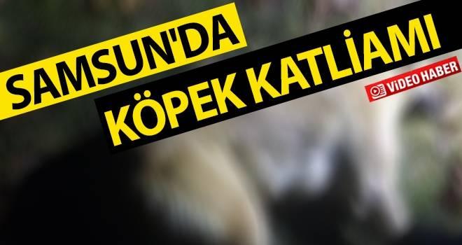 Samsun'da Köpek Katliamı